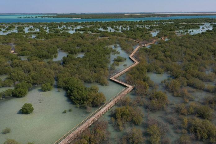 new Mangrove walk jubail island